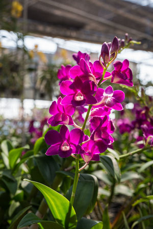 Beauty In Nature Blooming Close-up Day Flower Flower Head Focus On Foreground Fragility Freshness Growth Leaf Nature No People Outdoors Petal Pink Color Plant Purple Vanda