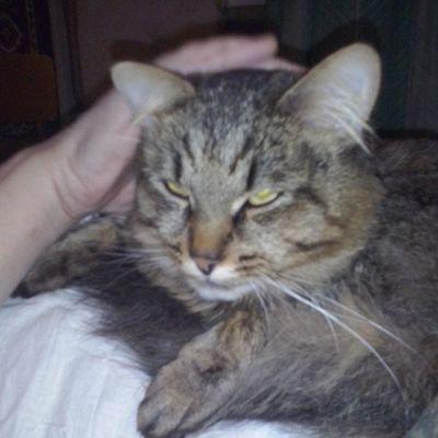 Котейка Кузьма кузя кошки любителямкошек любимчик котейка котуха няша няшность