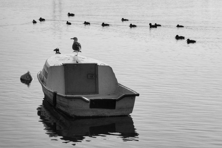 on the river River Vistula Swimming Birds Black And White Seagull Boat Bird Water Floating On Water Reflection Duck Water Bird