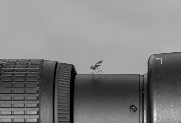 Close-up of mosquito on camera