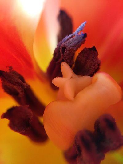 🌷Blüte Tadaa Community EyeEm Nature Lover Eyem Nature Nature EyeEm Deutschland Makro Flower