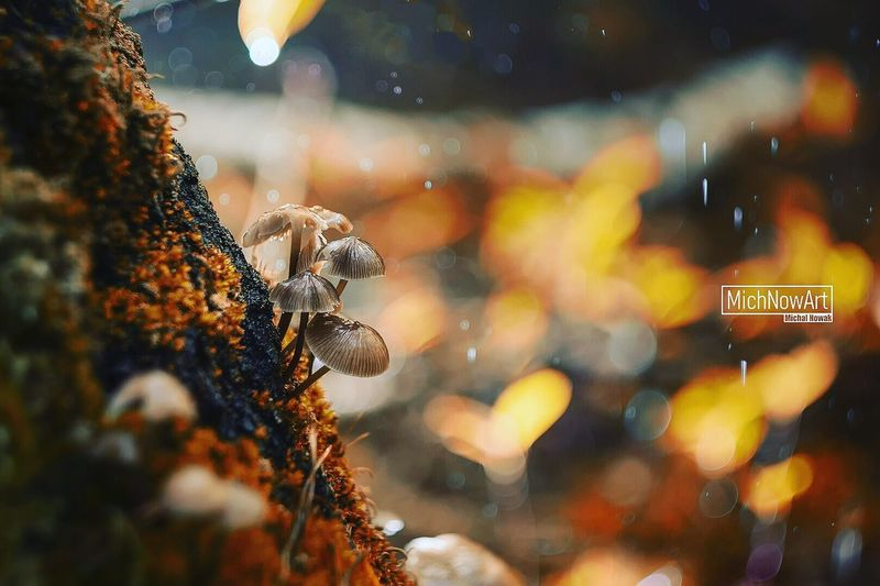 Animal Themes Animals In The Wild Insect One Animal Animal Wildlife Close-up Nature No People Outdoors Focus On Foreground Day Bee Mushroom Bokeh Bokeh Photography Autumn Paint The Town Yellow