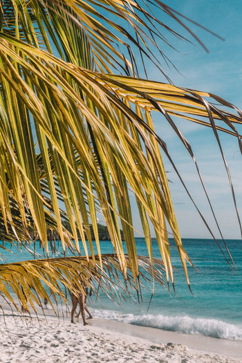 Close-up of palm tree on beach against sky