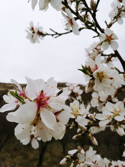 Tree Nature Flower Blossom Beauty In Nature Plant Growth Flower Head Branch Springtime Close-up Twig Fragility Scenics Beauty No People Social Issues Winter Outdoors Freshness