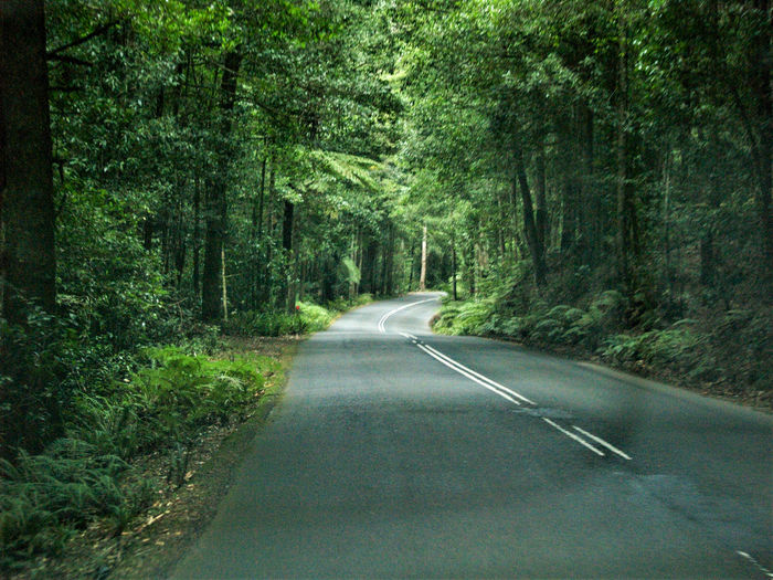 road trip for a better mood Road Tree Transportation Plant Direction The Way Forward Forest Marking Road Marking Sign Day No People Nature Symbol Green Color Land Tranquility Growth Non-urban Scene Beauty In Nature Diminishing Perspective Outdoors Long Roadtrip Jungle Street
