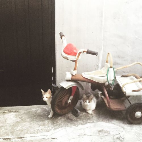 Cat Garden Bycicle Babycats