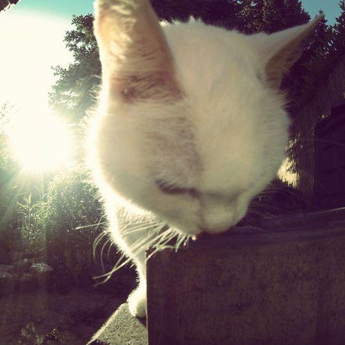 DonMollyone Cat Katze Altesmädchen
