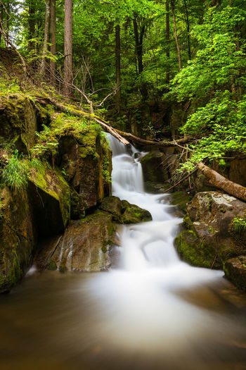 Waterfall at Bistriški gorge Slovenia Tree Trunk Beauty In Nature Blurred Motion Day Environment Flowing Flowing Water Forest Growth Long Exposure Motion Nature No People Outdoors Plant Power In Nature Rock Scenics - Nature Stream - Flowing Water Tree Water Waterfall