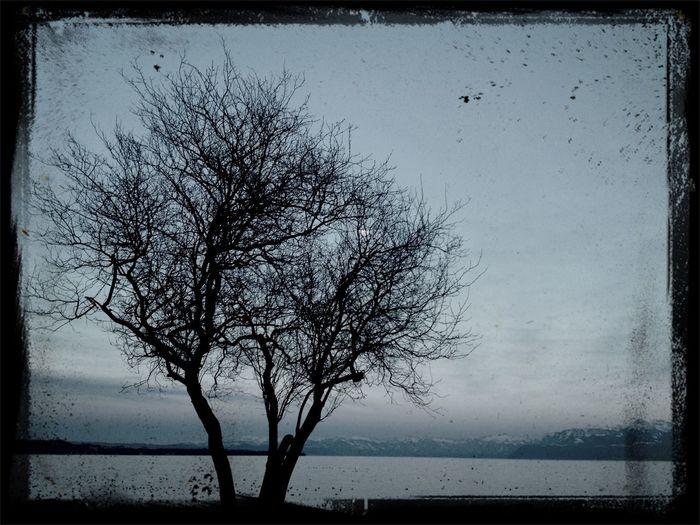 Tree Lake Lac Léman