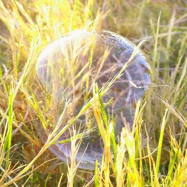 Bubble Huffpostgram Picoftheday Summerwalk Bestpic Coolshot JESUSISREAL Grass Summertime Fragile Greatshot Photography Delicate Pop Sunlight Sunshine Upclose  GalaxyS5 Art JustMe INTIME Photo
