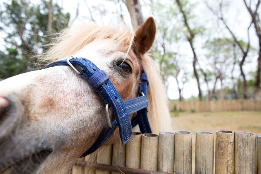 Horse close up. Animal Body Part Day Focus On Foreground Herbivorous Horse Mammal No People Outdoors Pony