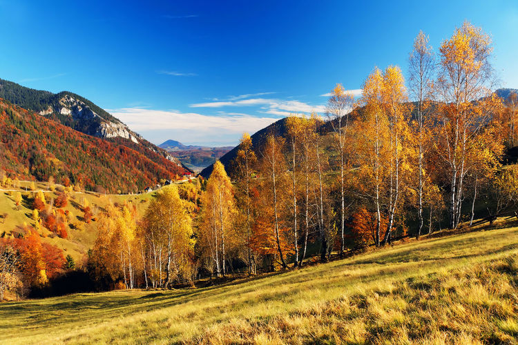 Scenic view of trees and mountains against blue sky during autumn