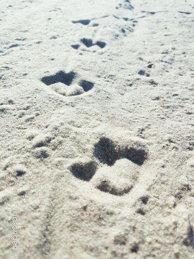 Spuren im Sand - Möwe Spuren Im Sand Spuren Hinterlassen Möwe Strand Nature In Beauty Sand & Sea EyeEm Nature Lover EeYem Best Shots Ostsee Glücklich Day Baltic Sea EyeEm Best Shots - Nature Urlaub EyeEm Best Shots Sonne, Strand Und Meer Beach Sea Sand Nature