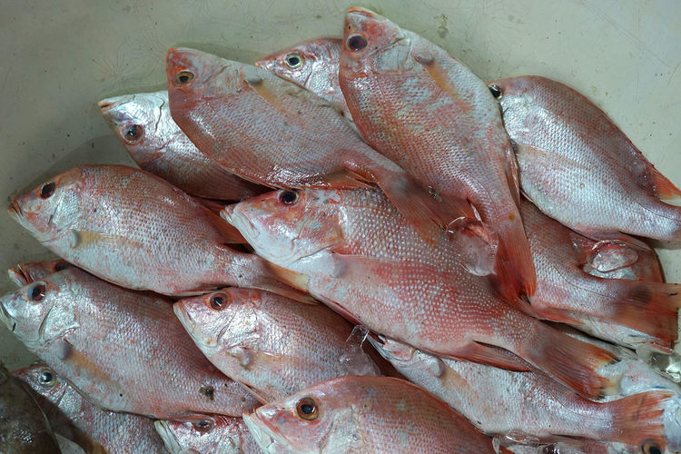 Red snapper is ready to sell Food And Drink Seafood Food Fish Freshness Raw Food Healthy Eating For Sale Market Retail  No People Fish Market Fishing Industry Sale Red Snapper Redsnapper
