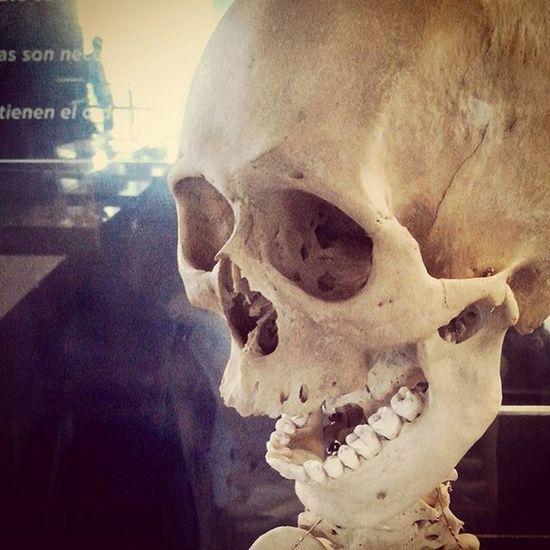 Calavera  Rastasmgph Hoo Tecnopolis Buenosaires Esqueleto