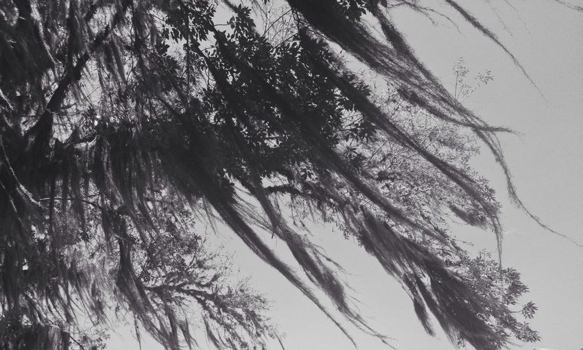 When the wind blows and it's dark outside Trees Dark Blackandwhite