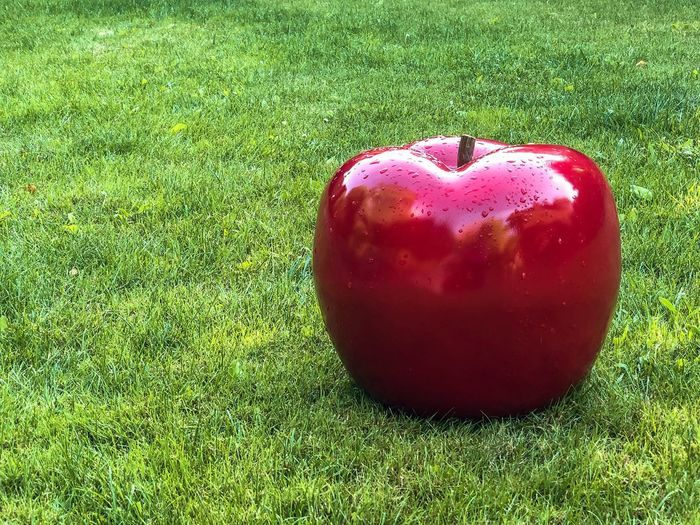 Giant Apple on the grass 2 Grass Red Plant Food And Drink Fruit Green Color Food Grass Red Plant Food And Drink Fruit Green Color Food Healthy Eating Wellbeing Apple - Fruit Nature Land Freshness Field Apple No People Day Outdoors High Angle View Sunlight