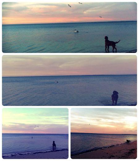 Beach Dog Landscape Trip