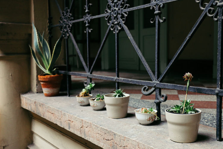 Close up of potted plants
