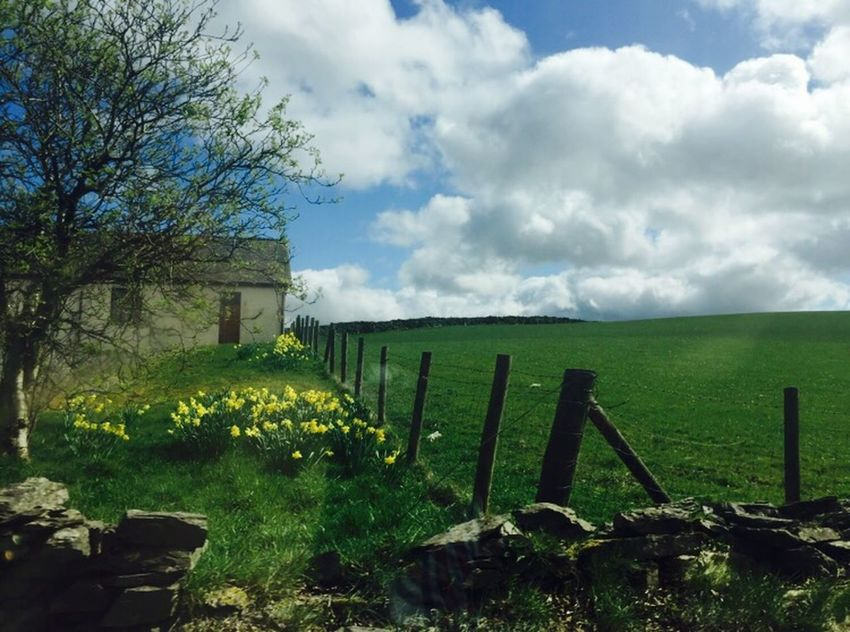 Cloud - Sky Sky Nature Outdoors Gate Day No People Field Grass Wood - Material Sunlight Green Color Landscape Beauty In Nature Wooden Post House Country Life Countryside Flowers,Plants & Garden Flowers Daffodils Flowers EyeEnNewHere