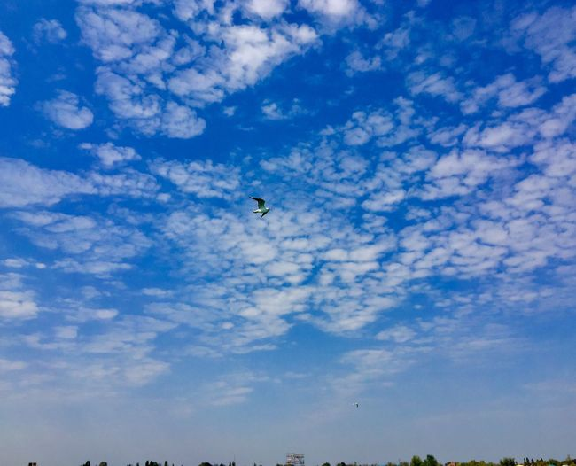 Sky Cloud - Sky Low Angle View Flying Blue Nature Animal Themes Animal Wildlife No People Beauty In Nature Vertebrate Scenics - Nature Animals In The Wild Animal Mid-air Tranquil Scene Adventure Day Bird Outdoors