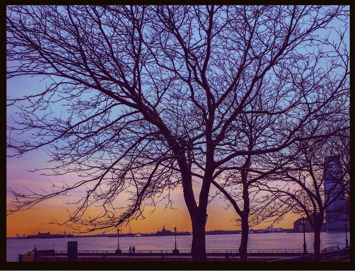 Sky Water Tree