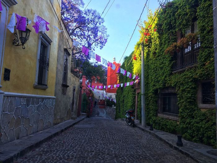 Colorful street Mexico San Miguel De Allende Building Exterior Built Structure Architecture Building Plant The Way Forward Direction Nature City Sky Decoration Residential District Street Tree No People Diminishing Perspective Day Outdoors Celebration House