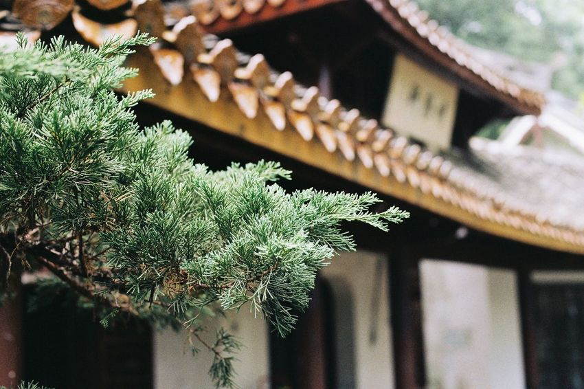 Ae-1 Film Canon Focus On Foreground Green Color Architecture No People Building Exterior Built Structure Day Plant Close-up Growth Outdoors Nature
