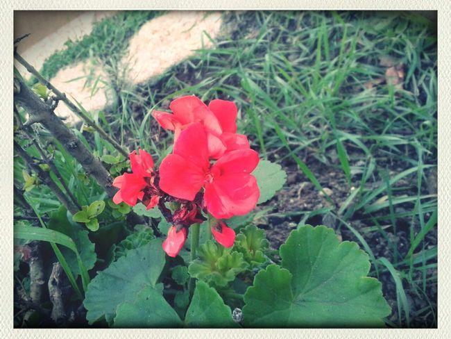 flor te amo aduffyd♡