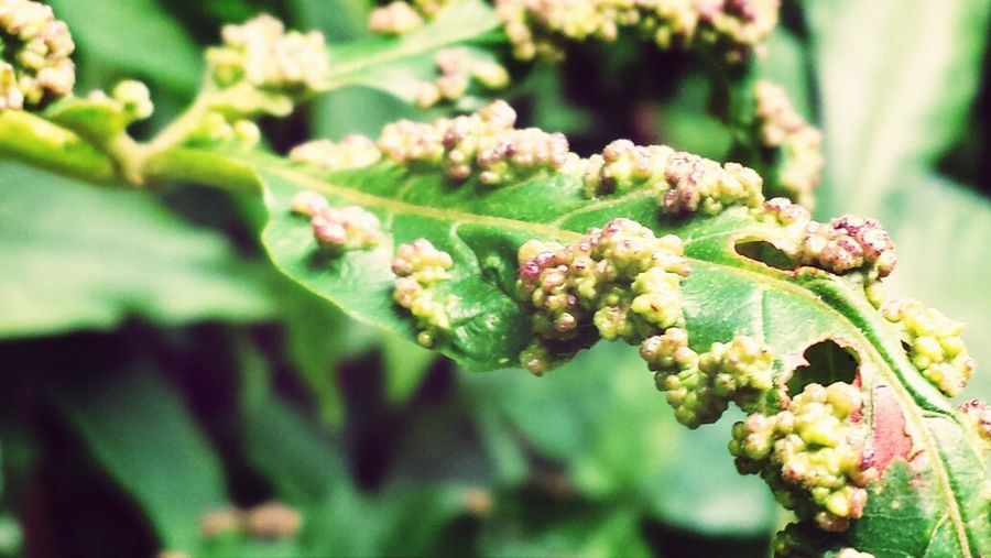 Plants do get sick too! Did you know that there are various ways plants do tell ua that they are not doing well? For some, its a form of discolouration or consequences of infestation and for others, deforminity takes precedence. It all trace back to us on what we do or didn't do enough to protect and nurture the little nature reserves we have left.