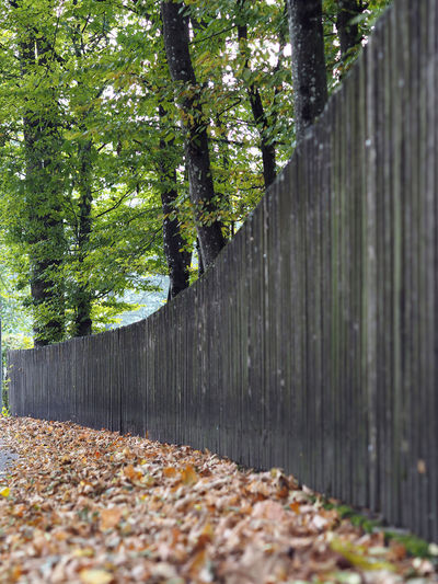 Tree Plant Leaf Plant Part Autumn Fence Nature Boundary Barrier Day No People Wood - Material Falling Forest Change Outdoors Footpath Land Selective Focus Growth Surface Level Leaves