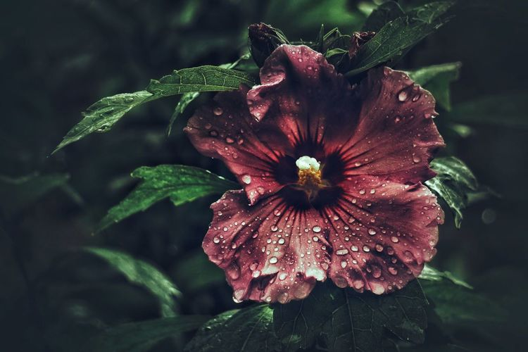 Flower Nature Plant Growth Fragility Freshness Beauty In Nature Petal Flower Head Focus On Foreground Leaf Close-up Blooming No People Outdoors Day Petunia