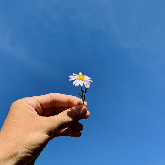 Cropped hand holding flower against blue sky