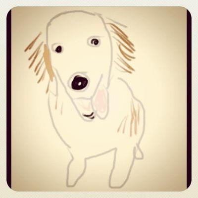 หอยโข่ง Drawing Goldenretriever Hoykong Dog