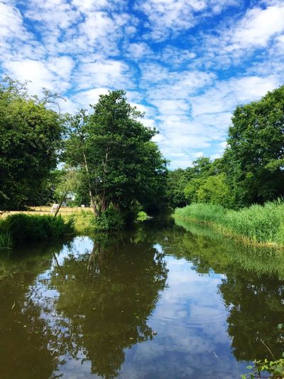 Perfect Match Tree Reflections Refections Blue Sky Lush Lush Greenery Lush Foliage Summertime Relaxing Idyllic English Countryside