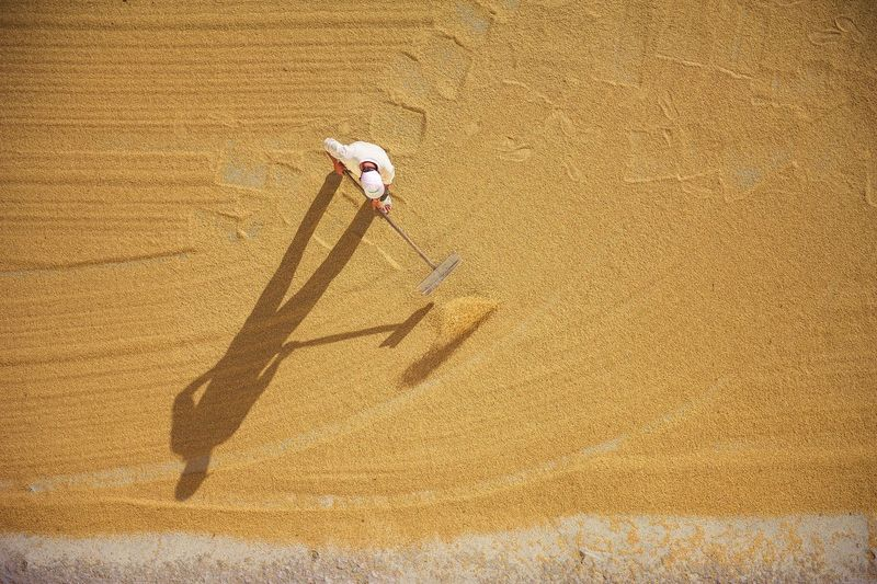 High angle view of man working on agricultural field