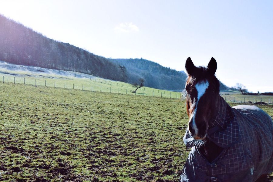 Winter Horse   Horse Animals Getting In Touch Creativity Nature Ice Frost Winter Trees Winter Trees Nature_collection Hugging A Tree Getting In Touch Light And Shadow Eye4photography  Shootermag EyeEm Gallery Landscape Taking Photos Grass Sun Green