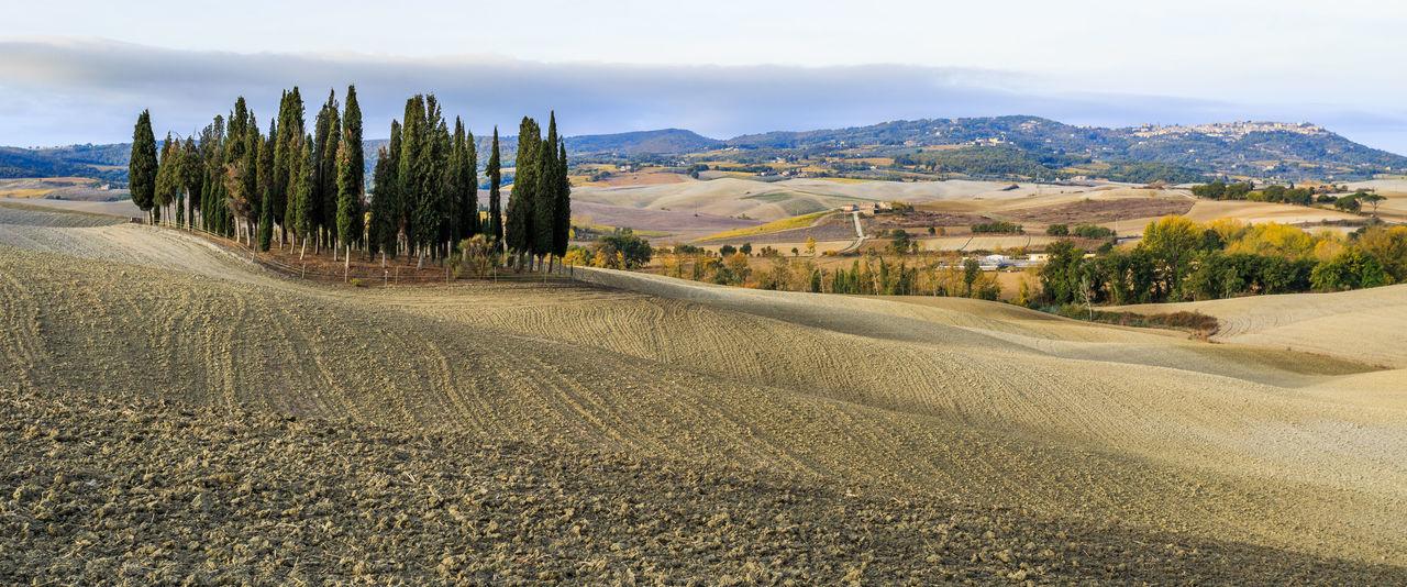 Toscany - Gladiators Italia Italien Landschaft Toskana Tuscany Countryside Cypress Trees  Erdbeeren Italy Zypressen
