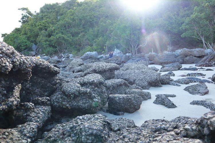 Rock Nature
