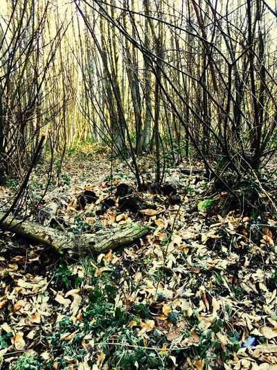 A wooded