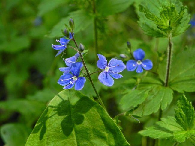 Flowers Nature Enjoying Life