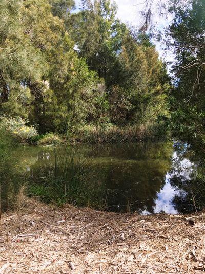 Lake Macquarie Wetlands Wetlands Lake Macquarie Nature Plants Trees Reflection Lake Wood Chip