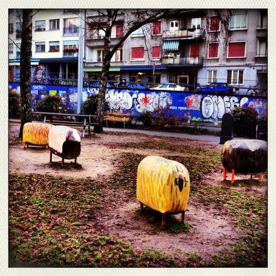 Urban Sheeps