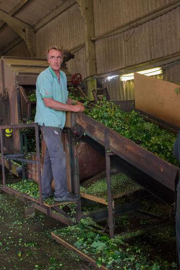 Portrait of man working in farm