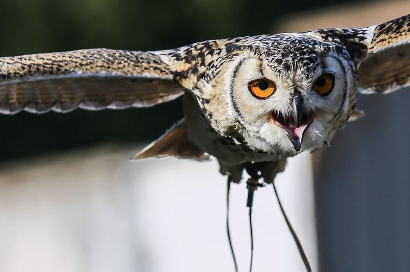 View Of Owl