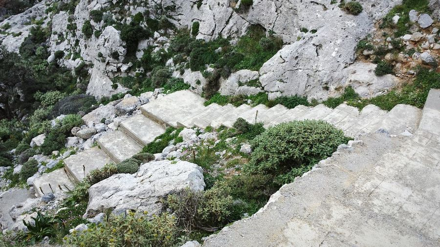 Full frame shot of moss on rock
