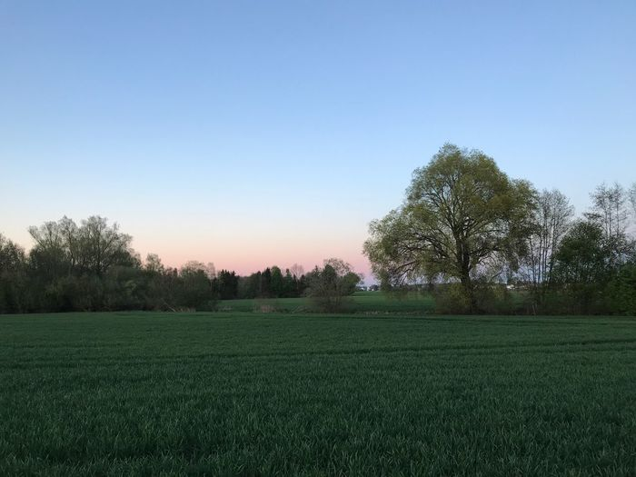 Plant Tree Sky Green Color Tranquility Field Beauty In Nature Tranquil Scene Landscape Scenics - Nature Nature Agriculture Grass Clear Sky Land