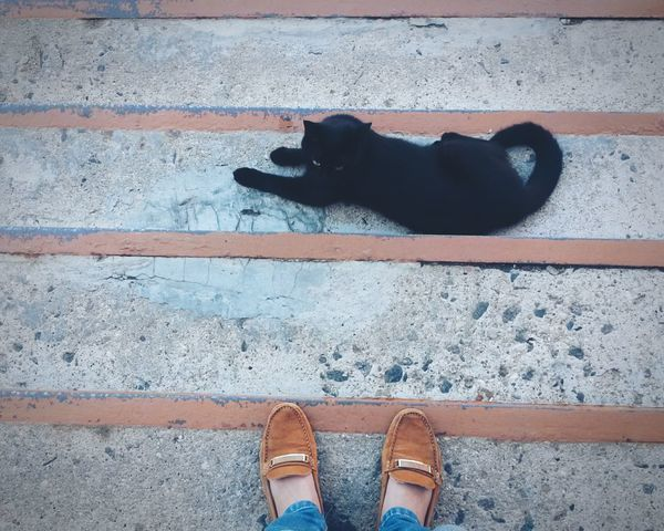 Cat BLackCat Taking Photos Cats Animal Photography
