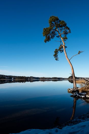 Beautiful winter mood at the lake Ostersee in Bavaria Blue Tranquility Tranquil Scene Tree Nature Beauty In Nature Clear Sky Scenics Outdoors Tree Trunk No People Water Landscape Lake Sky