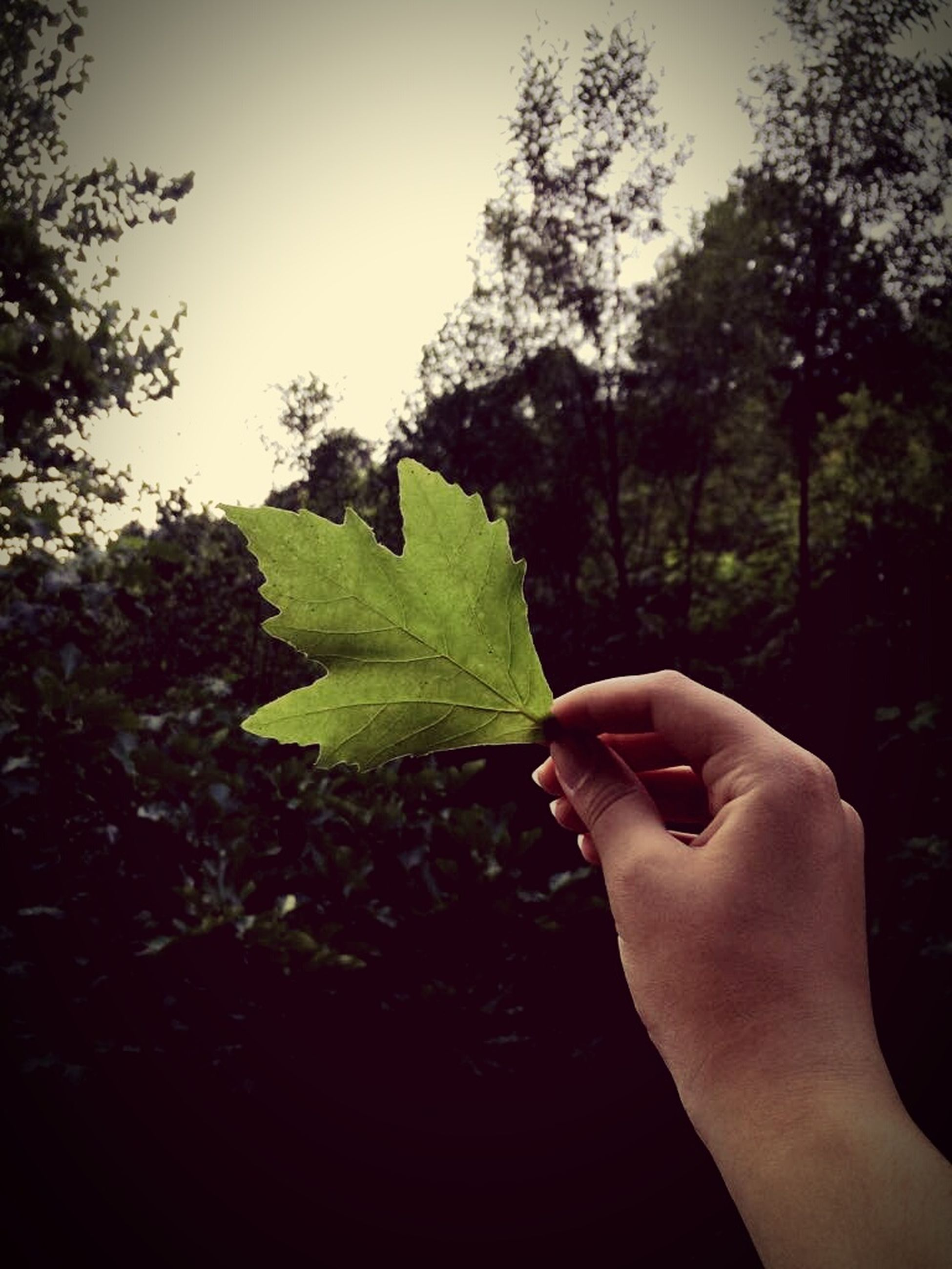 human hand, human body part, leaf, tree, holding, one person, real people, human finger, personal perspective, green color, close-up, nature, day, outdoors, beauty in nature, sky, freshness, people